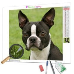 Diamond Painting – Boston Terrier