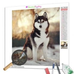 Diamond Painting – Husky